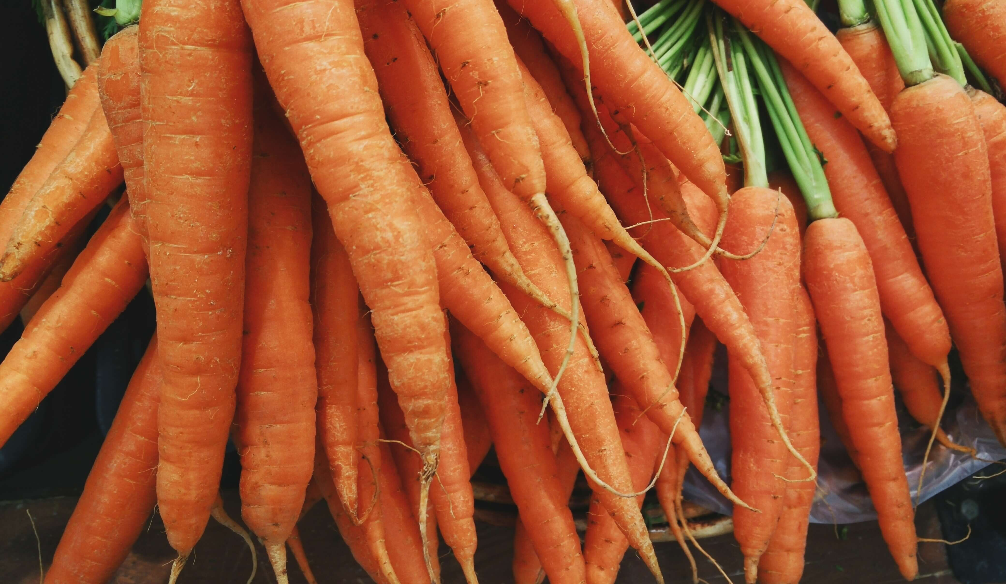 lactogenic foods carrots